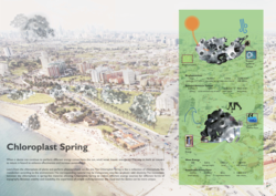 Chloroplast Spring